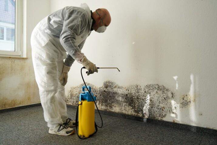 mold remediation tampa man treating mold