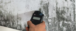 mold detection tips