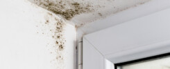 signs of black mold